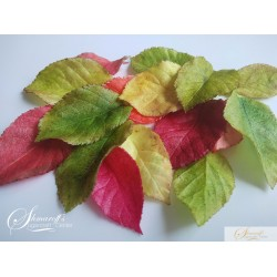 Precut Leaves - Rose White