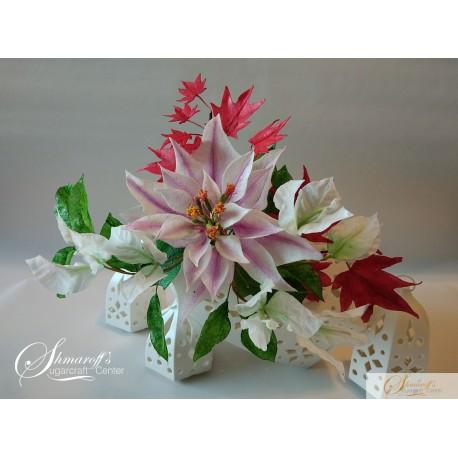 Poinsettia  Class
