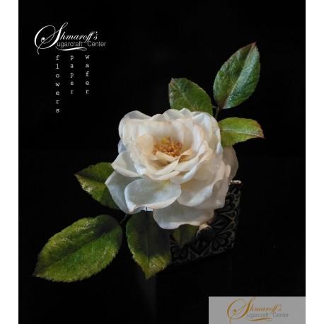 """Project """"Open Garden Rose"""" Online  Class"""