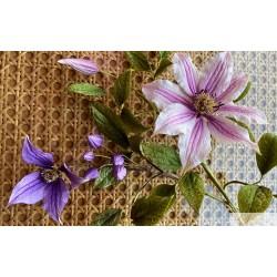 FaceBook Live Lessons - Clematis Flower Gumpaste with Alan Dunn