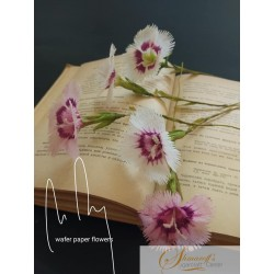Wafer paper Dianthus - Video Lesson
